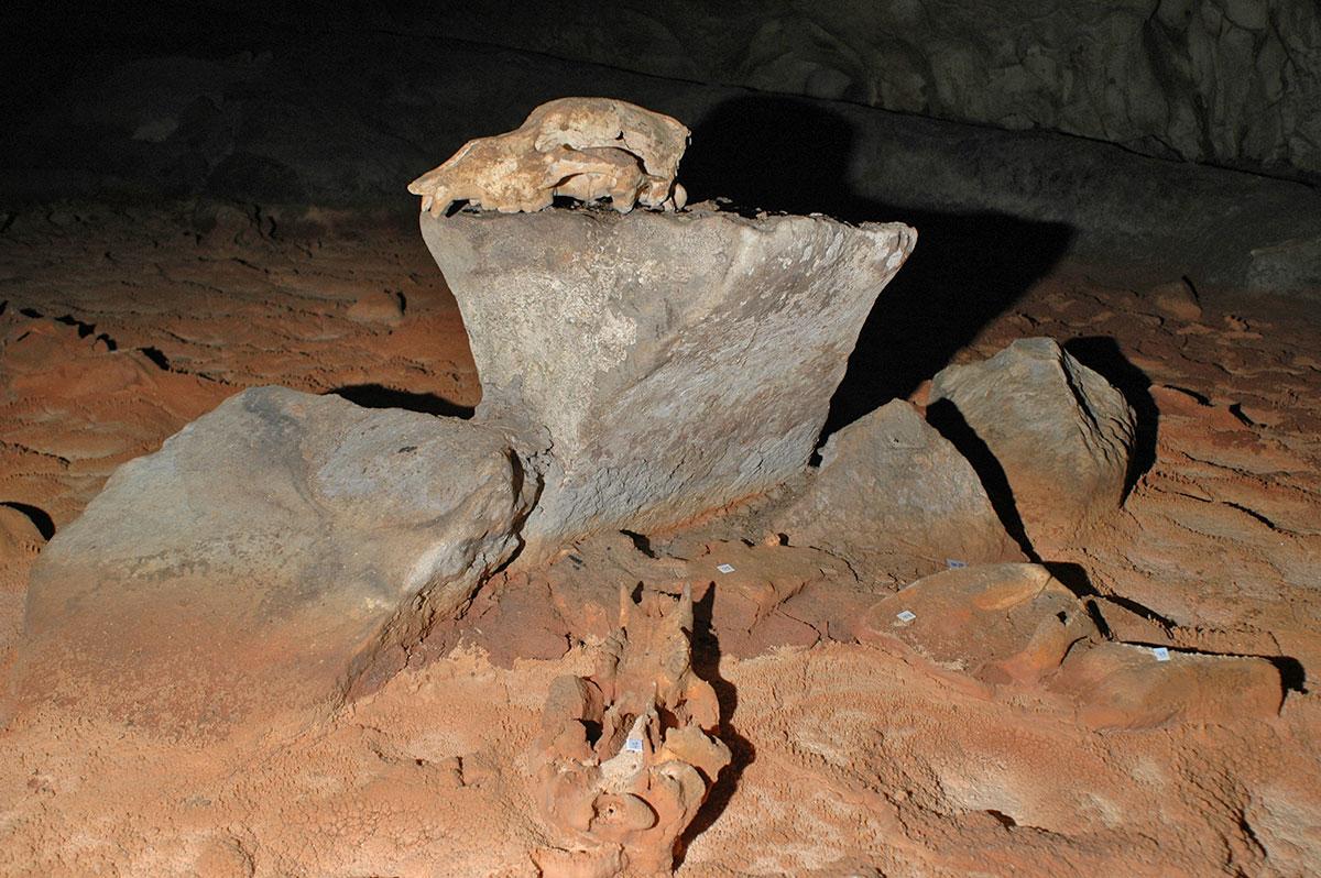 Crane d'ours dans la Grotte Chauvet
